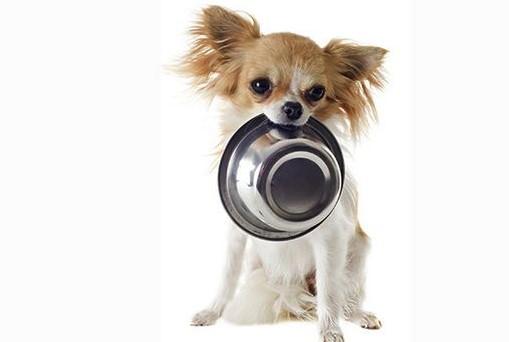 Рационы питания для разных возрастных категорий собак.