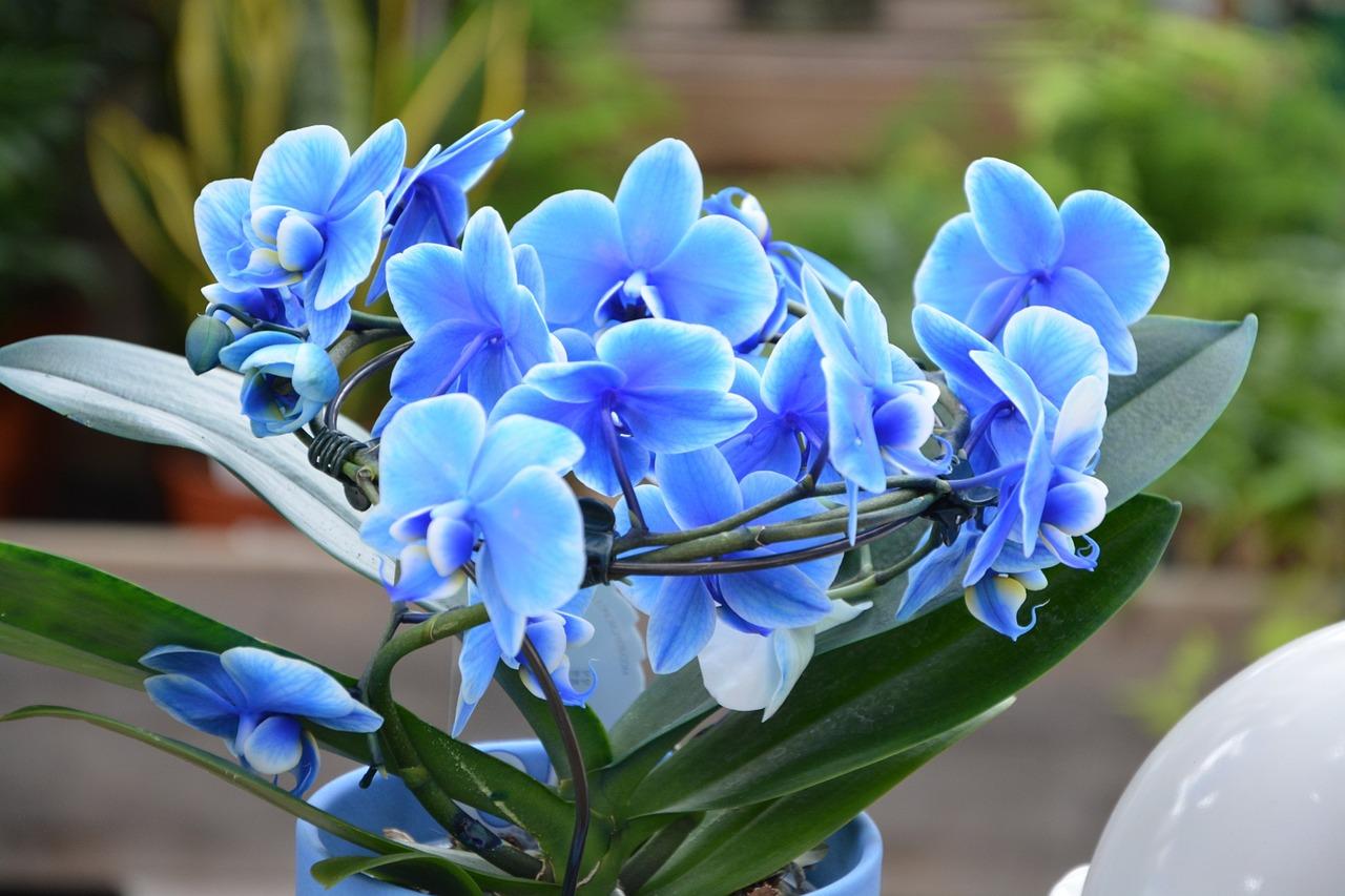 Орхидея — чудо выживания