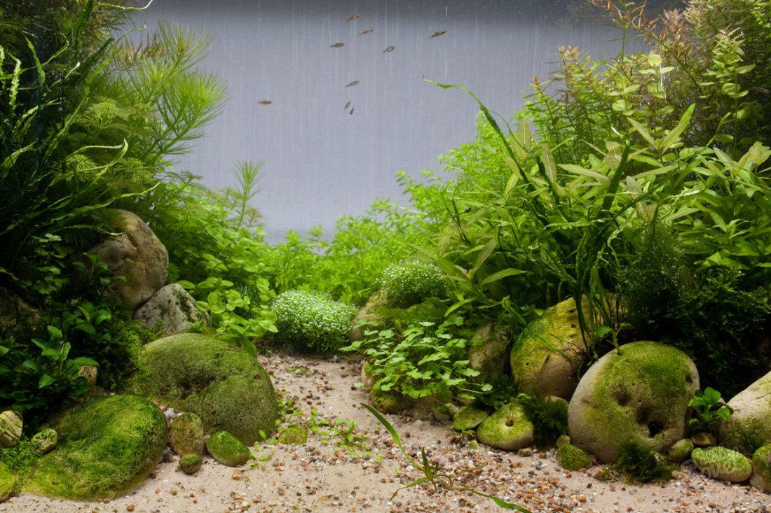 Как избавиться от водорослей в аквариуме?