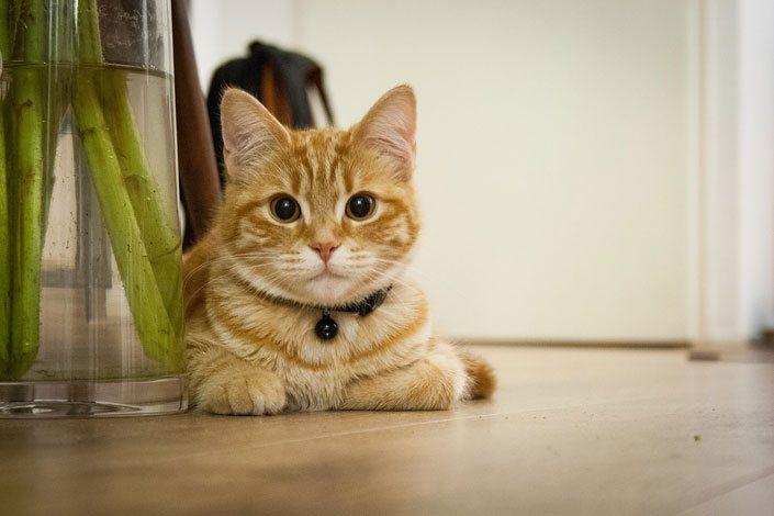 Передержка кошек на время отпуска